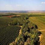 Cu cât a scăzut producția agricolă în primele 9 luni. Date statistice