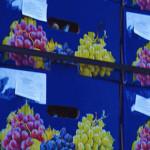 Importatorii din Croația sunt interesați de fructele și strugurii din Moldova