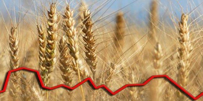 În ultimul an, prețul grâului a crescut cu peste 40%