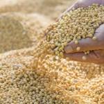 Importurile chineze de soia ar putea ajunge la 100 de milioane de tone