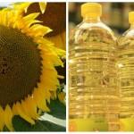 Floarea-soarelui high oleic: evoluție, tendințe și oportunități