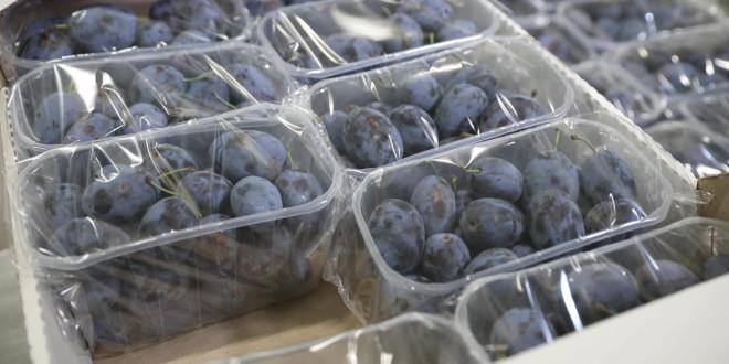 Primul echipament de ambalare flow pack a fructelor și strugurilor pentru export lansat la Costești cu suportul USAID