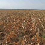 Rezultatele preliminare privind acordarea compensațiilor pentru diminuarea consecințelor calamităților naturale