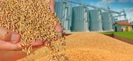 Prețul grâului la burse scade, însă în cazul livrărilor fizice rămâne stabil