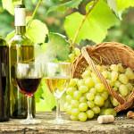 Guvernul a aprobat modificarea Legii viei și vinului