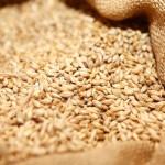 Estimări optimiste privind producția de cereale în 2021 în Europa