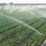 Proiectul USAID/APM acordă granturi pentru sporirea suprafețelor irigate