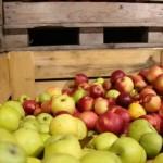 Un lot de mere moldovenești interzis în Rusia