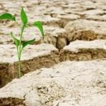 Subvenționarea primelor de asigurare în agricultură pentru anul 2021 în vigoare