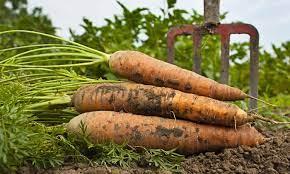 Producţia agricolă europeană va pierde 56 milioane tone până în 2030!