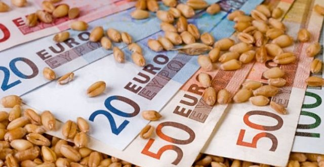 Preţul grâului a ajuns la 250 de euro/tonă! Porumbul este contractat cu aproape 230 euro/tonă!