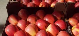 Câte fructe a exportat Republica Moldova anul trecut?