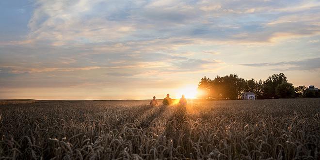 Revystar®  – Это не просто решение, а ностоящая Ревилюция в защите зерновых!
