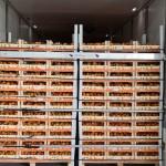Caise autohtone exportate în premieră în Olanda