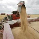 Egipt a cumpărat 180 mii tone de grâu din România și Ucraina