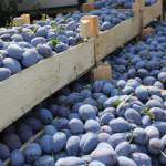 Republica Moldova a majorat exporturile de fructe, uleiuri vegetale și vin spre țările UE